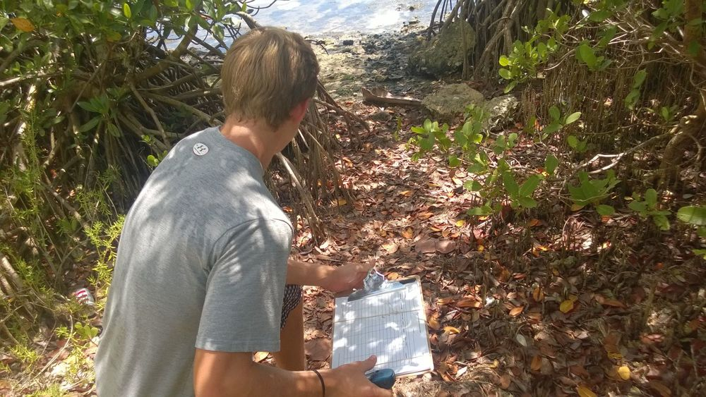 Checking the shoreline in the indian river lagoon for terrapin nesting sites (photo: L. Herren).