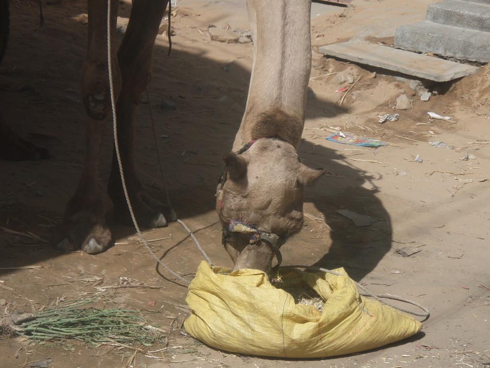 KATMDU DELHI JAIPUR 02-10 06 067.jpg