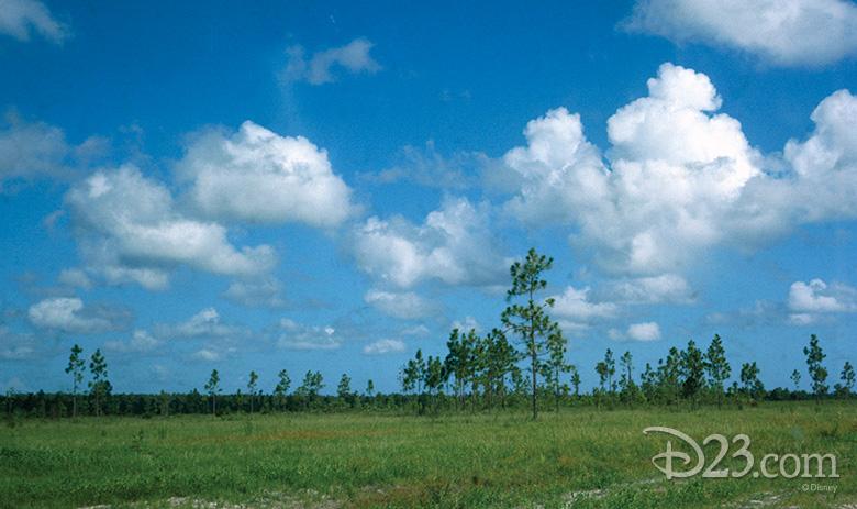 A piece of Disney's primitive Florida acreage, circa August 1966 - Photo Credit: Disney