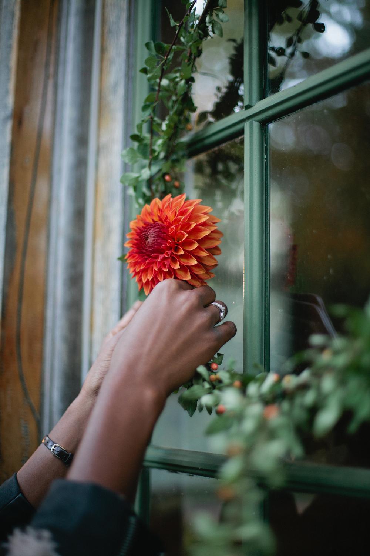 blooms_8793.jpg