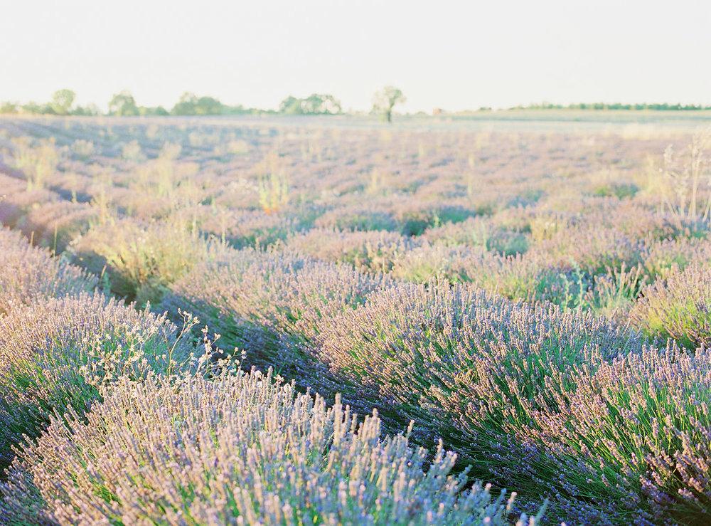 Anna_Provence2016-34OKbis.jpg