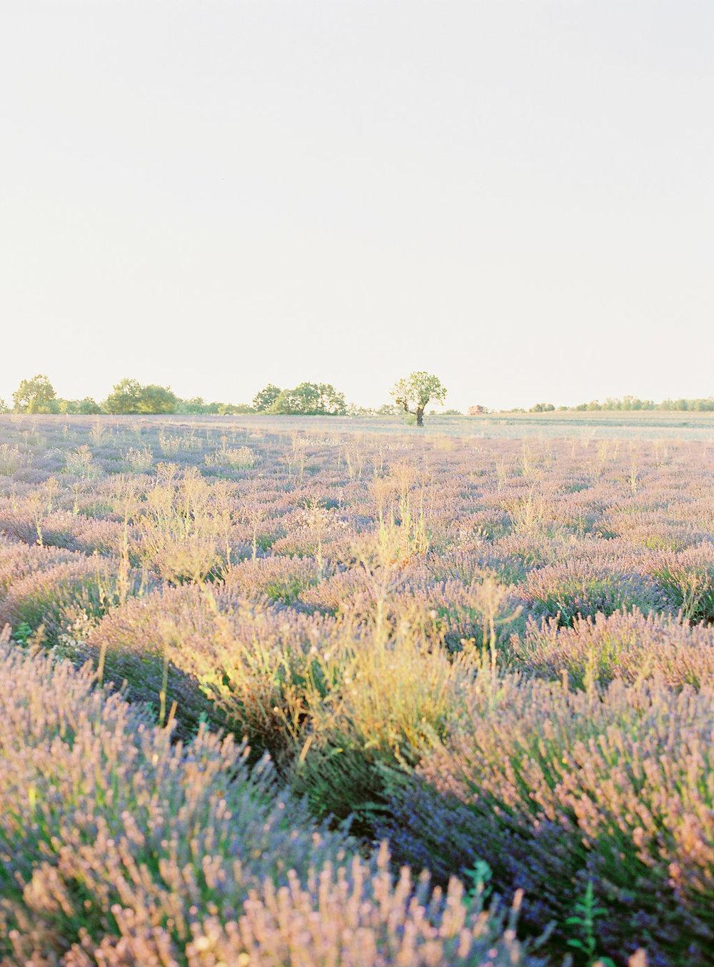 Anna_Provence2016-36OK.jpg