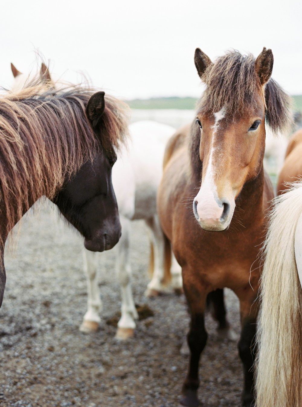 Horses in Iceland by Kristin Sweeting now on Cottage Hill17.jpg