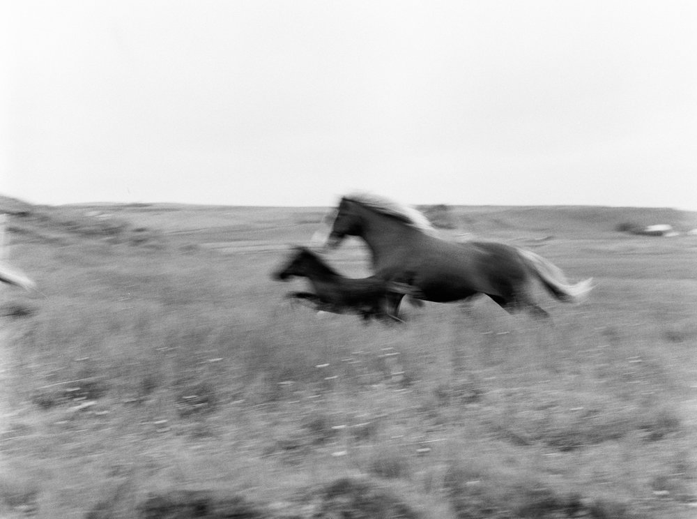 Horses in Iceland by Kristin Sweeting now on Cottage Hill76.jpg