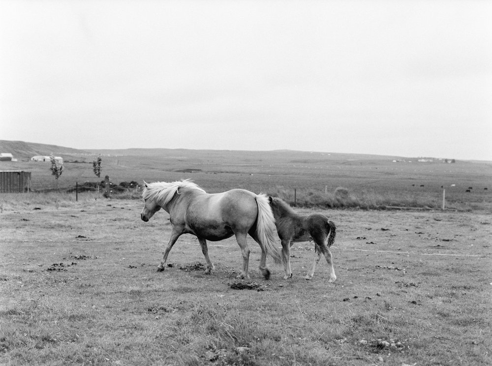 Horses in Iceland by Kristin Sweeting now on Cottage Hill77.jpg