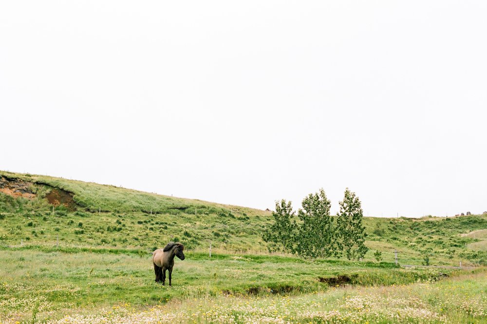 Horses in Iceland by Amilia James now on Cottage Hill7.jpg