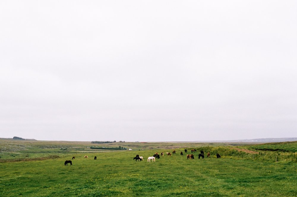 Horses in Iceland by Amilia James now on Cottage Hill8.jpg