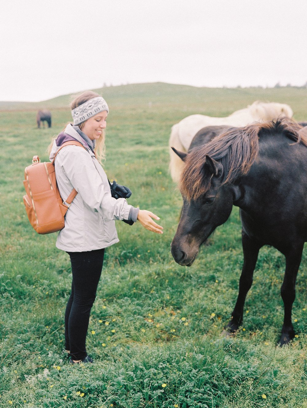 Horses in Iceland by Elli Jane now on Cottage Hill6.jpg
