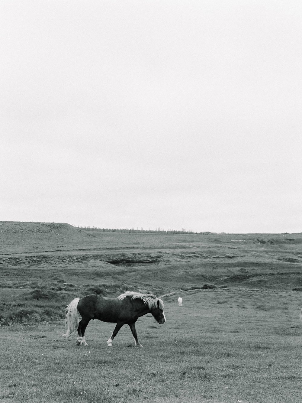 Horses in Iceland by Elli Jane now on Cottage Hill9.jpg