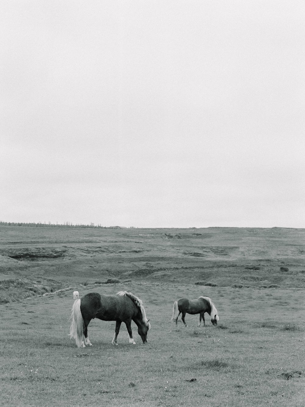 Horses in Iceland by Elli Jane now on Cottage Hill11.jpg