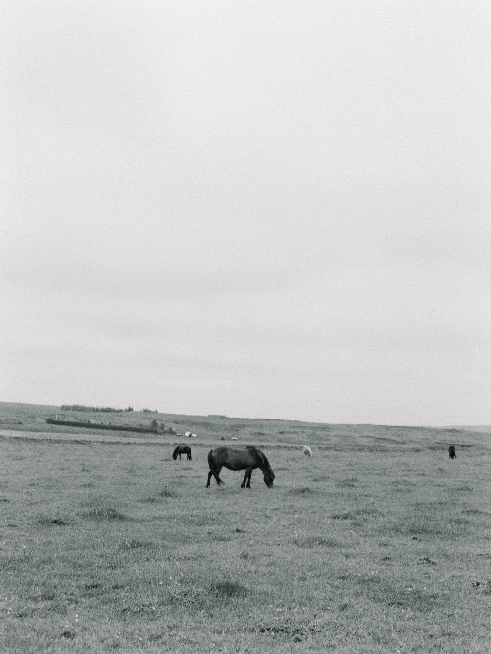 Horses in Iceland by Elli Jane now on Cottage Hill13.jpg