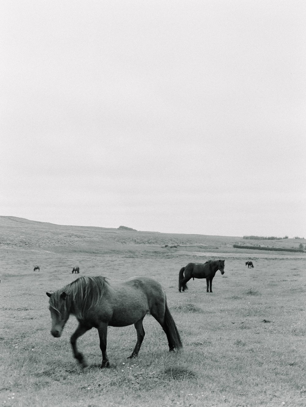 Horses in Iceland by Elli Jane now on Cottage Hill17.jpg