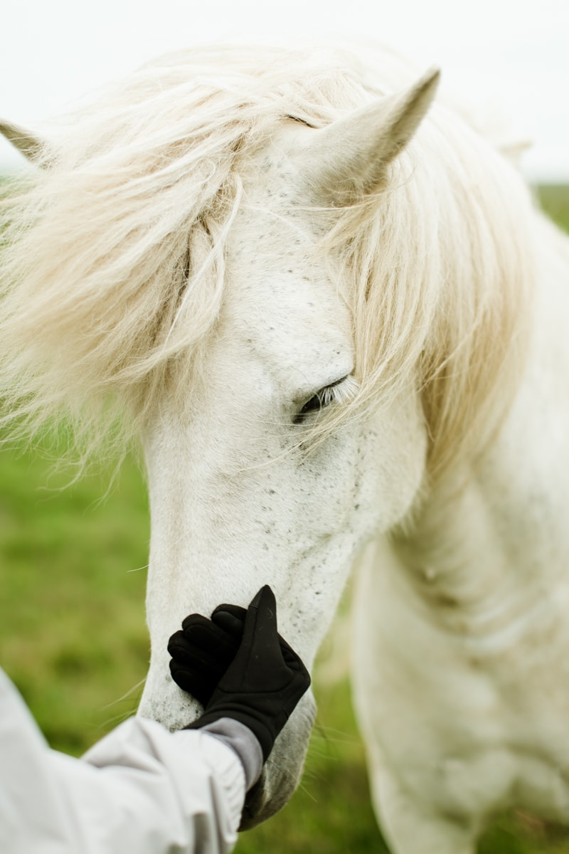 Horses in Iceland by Abigail Lauren now on Cottage Hill3.jpg