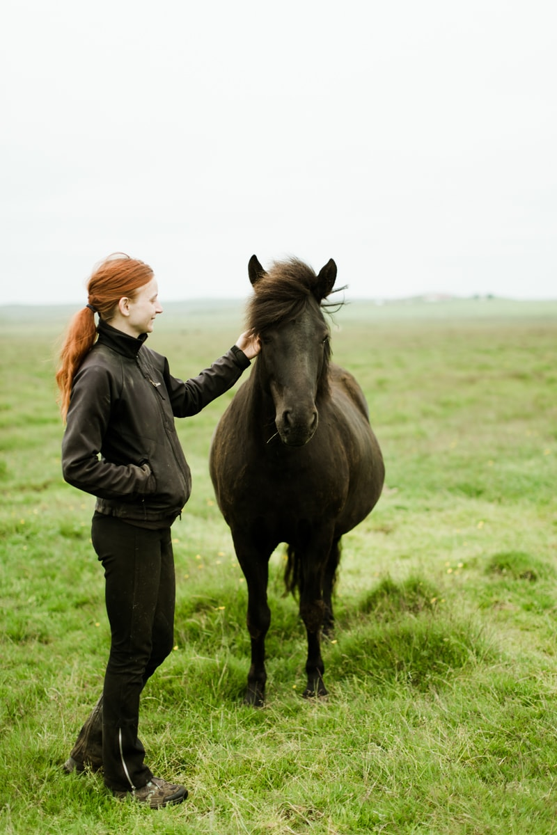 Horses in Iceland by Abigail Lauren now on Cottage Hill4.jpg
