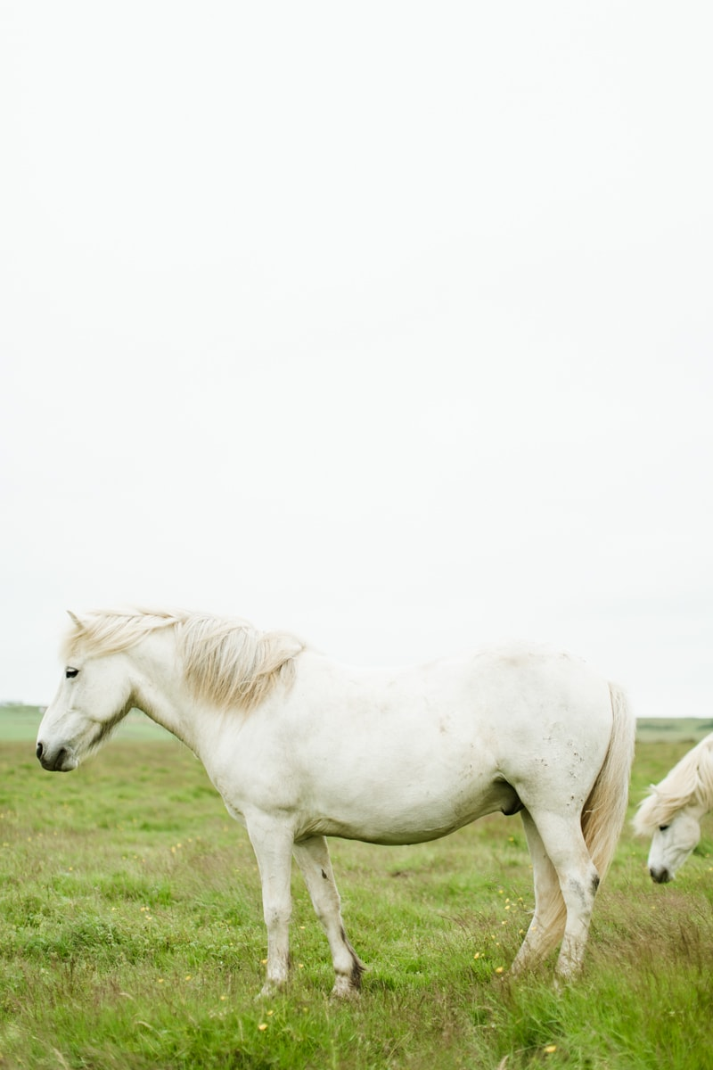 Horses in Iceland by Abigail Lauren now on Cottage Hill15.jpg