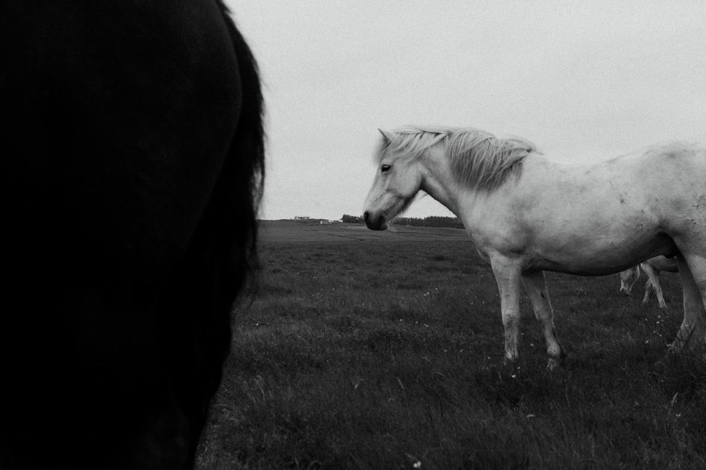 Horses in Iceland by Abigail Lauren now on Cottage Hill16.jpg