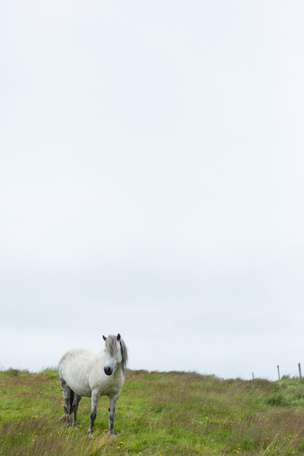 Horses in Iceland by Jen Madigan now on Cottage Hill19.jpg