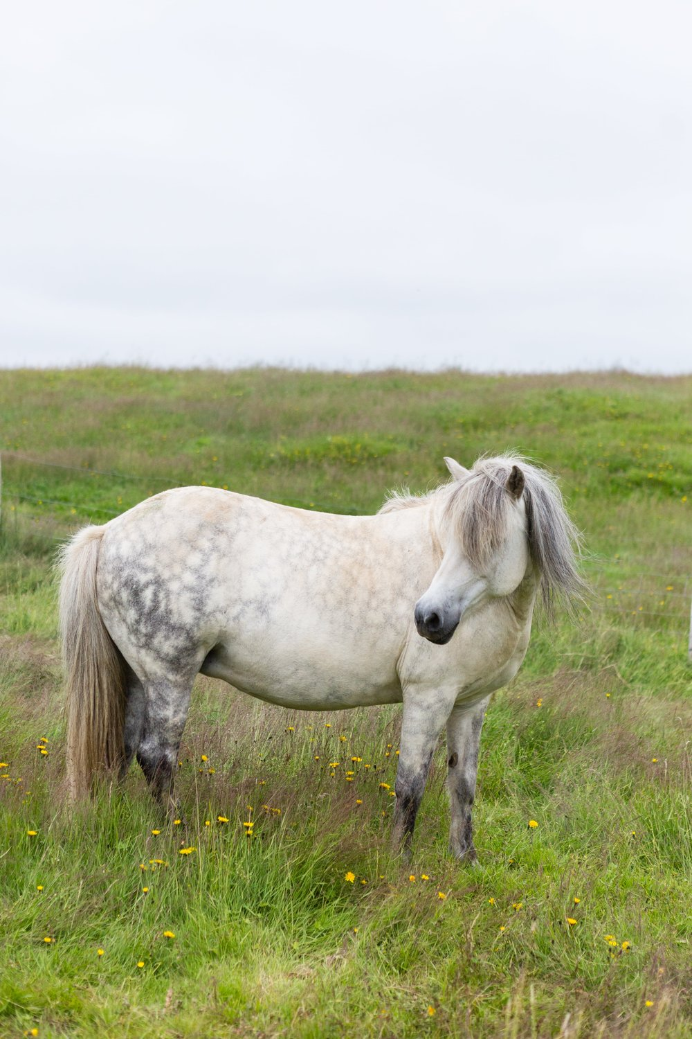 Horses in Iceland by Jen Madigan now on Cottage Hill20.jpg