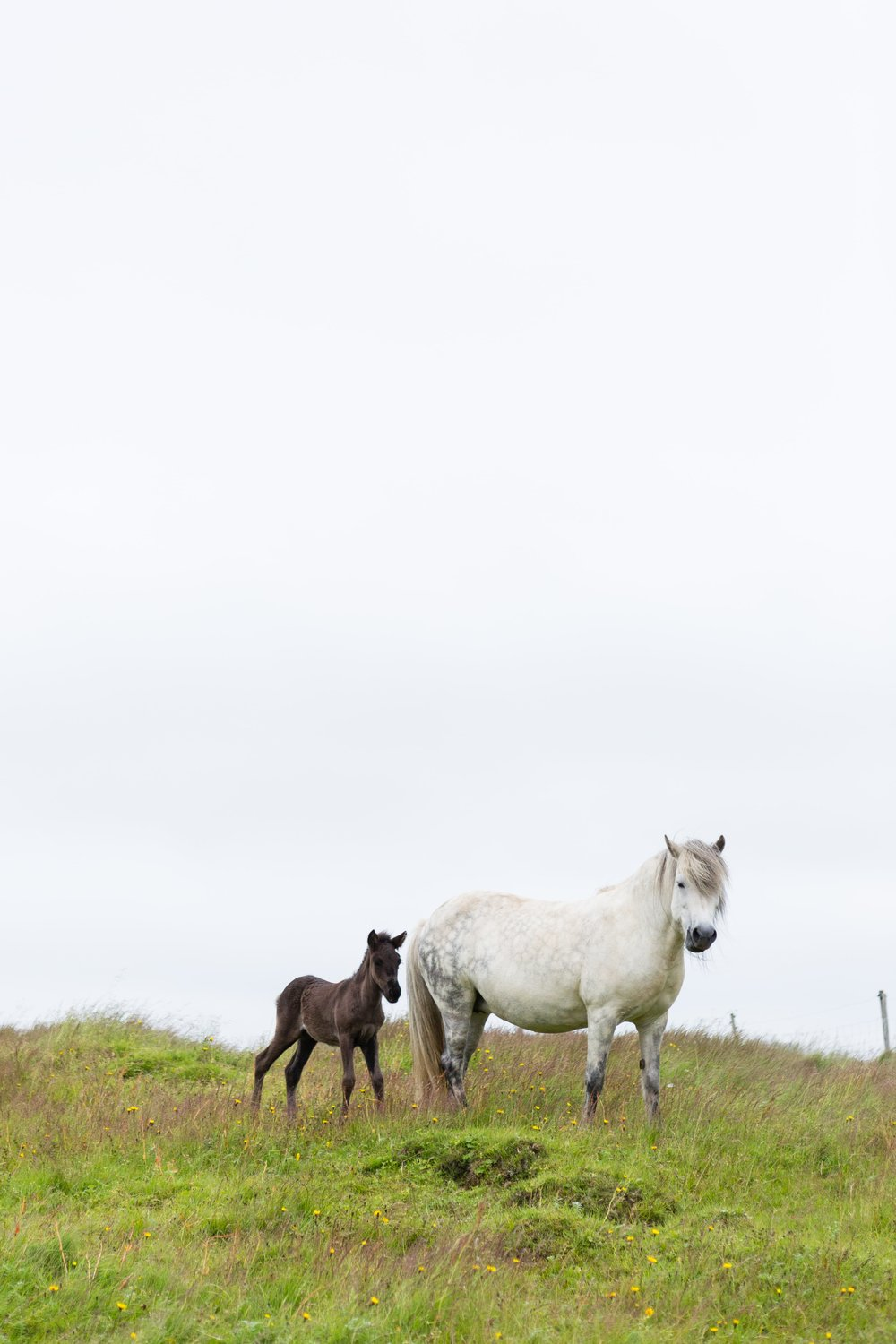 Horses in Iceland by Jen Madigan now on Cottage Hill26.jpg