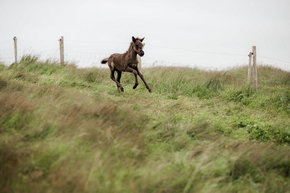 Horses in Iceland by Christina Swanson now on Cottage Hill27.jpg