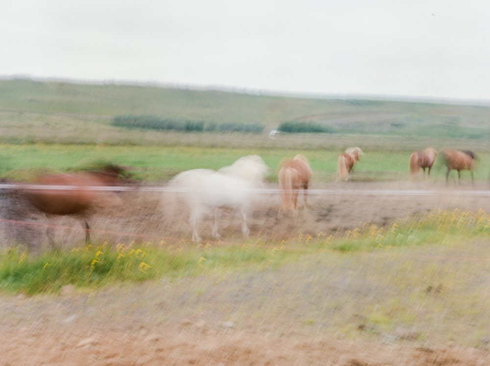 Horses in Iceland by Catherine Taylor now on Cottage Hill3.jpg