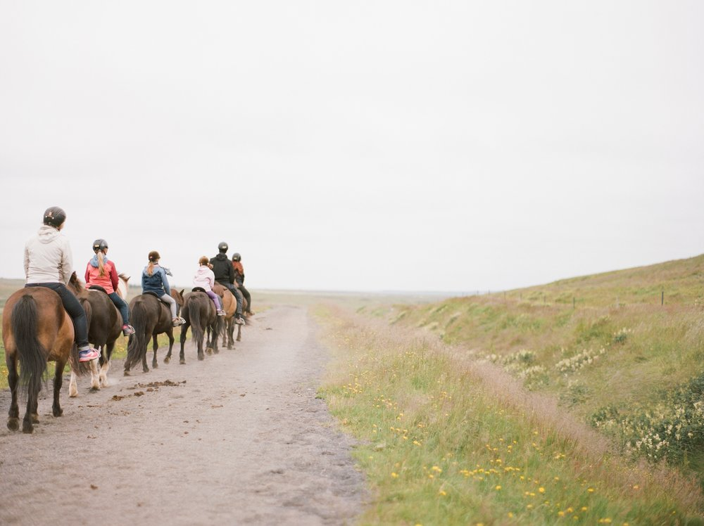 Horses in Iceland by Catherine Taylor now on Cottage Hill10.jpg