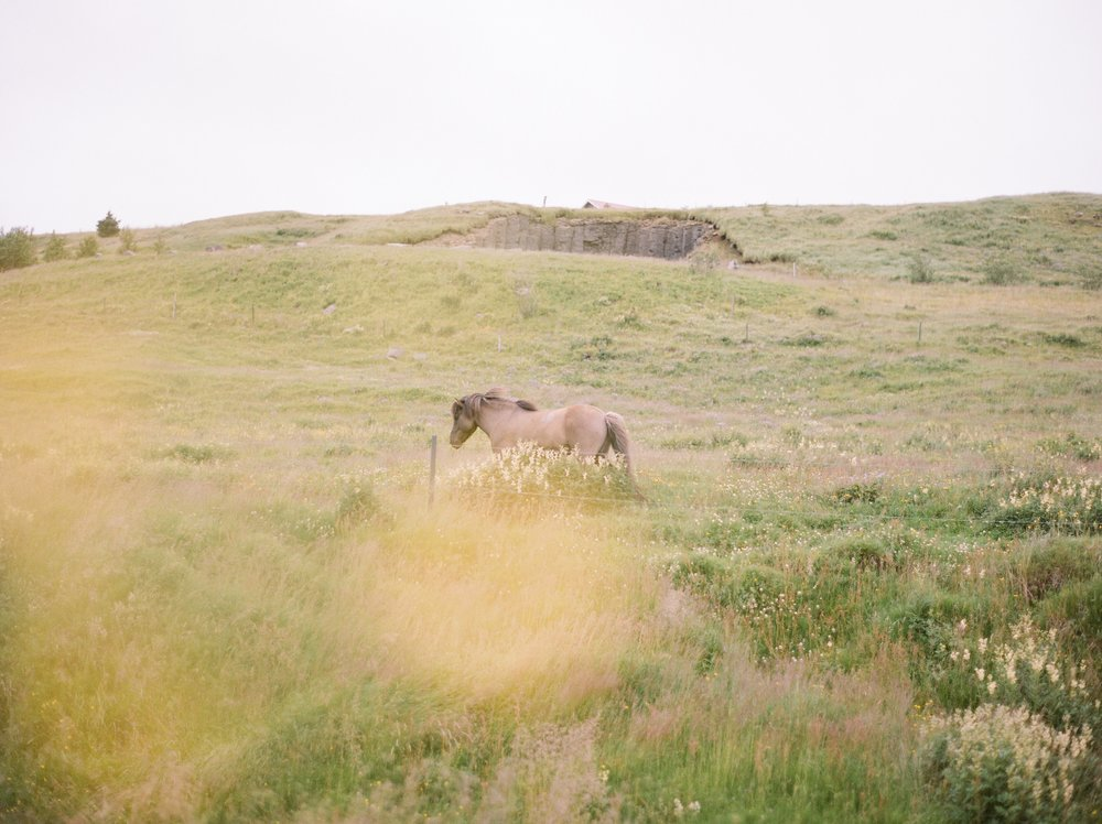 Horses in Iceland by Catherine Taylor now on Cottage Hill9.jpg