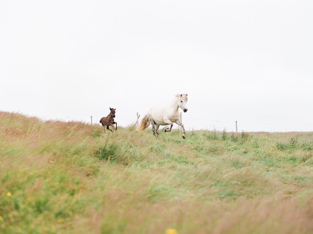 Horses in Iceland by Catherine Taylor now on Cottage Hill22.jpg