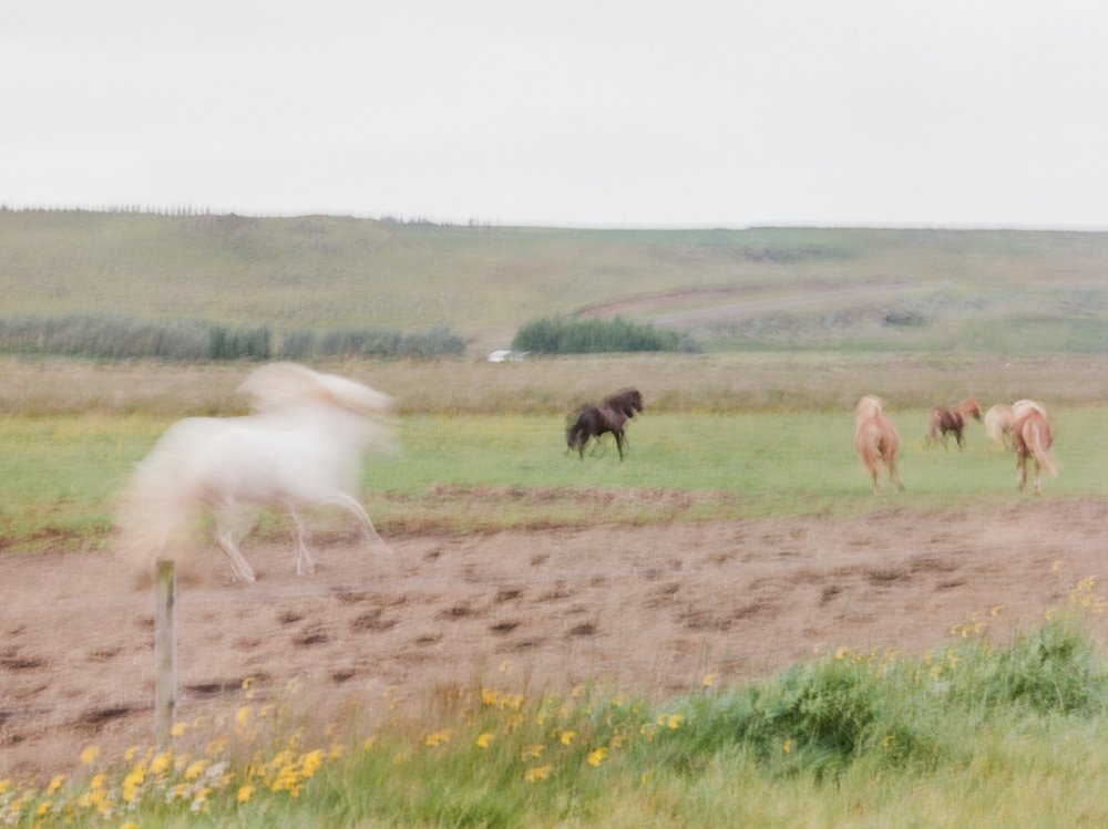 Horses in Iceland by Catherine Taylor now on Cottage Hill26.jpg