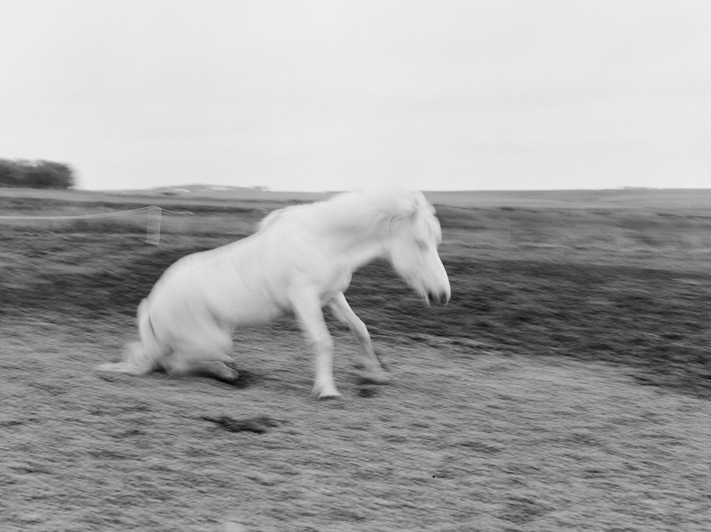 Horses in Iceland by Catherine Taylor now on Cottage Hill27.jpg