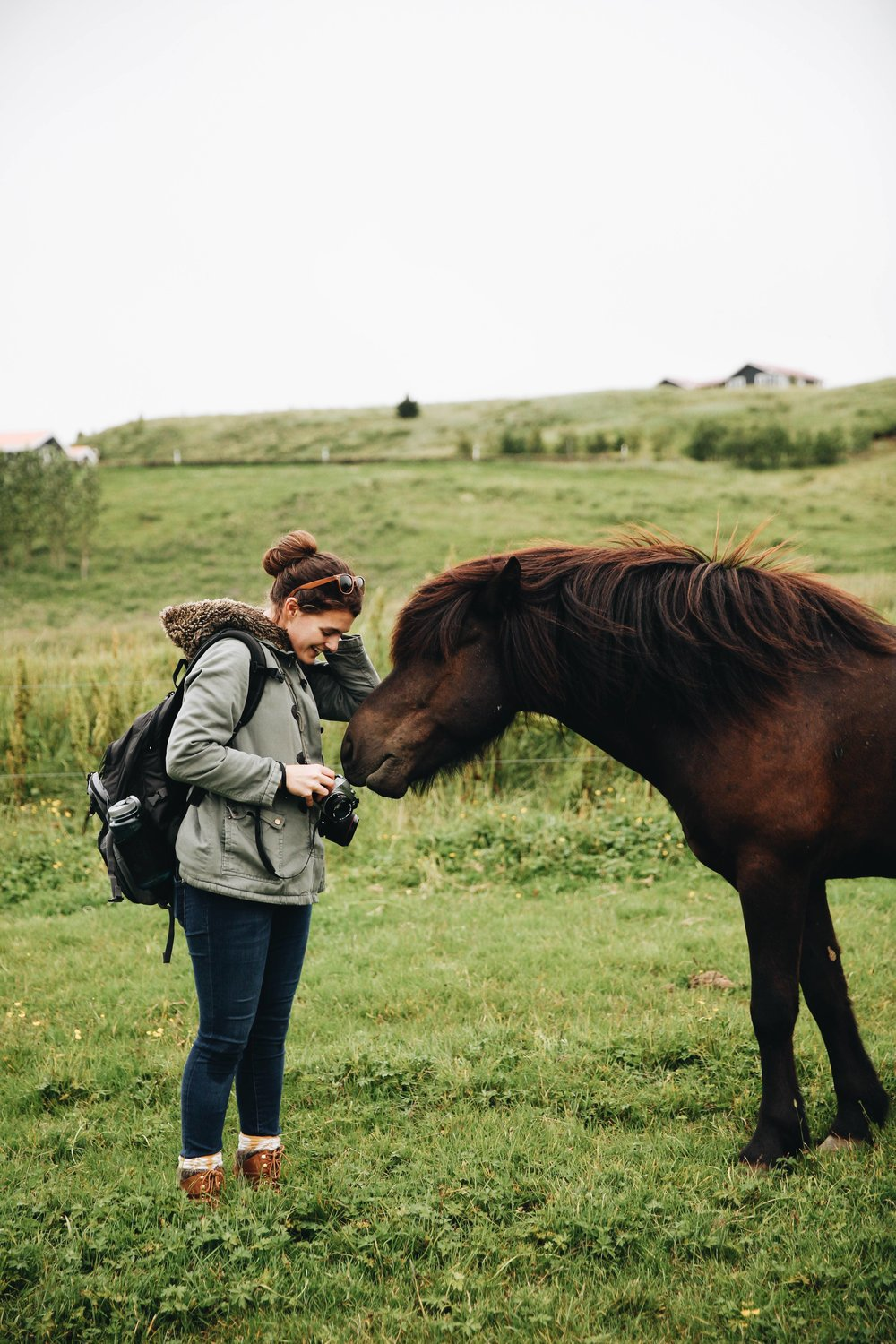 Horses in Iceland by Jessie Watts now on Cottage Hill2.jpg