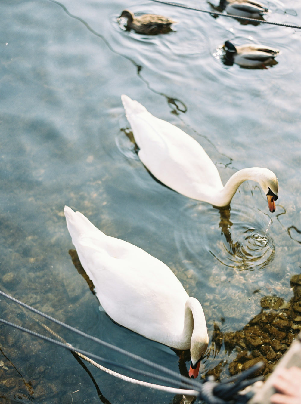 © Cottage Hill, LLC | Lake Como | cottagehill.co24.jpg