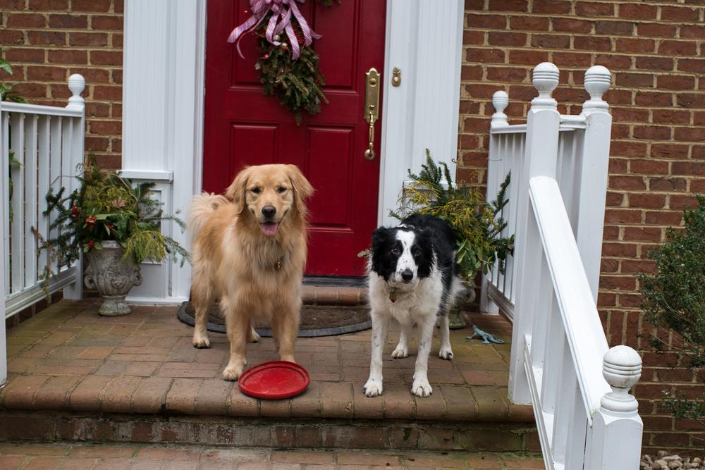 Lils, Chloe, and No Neighbor Dog