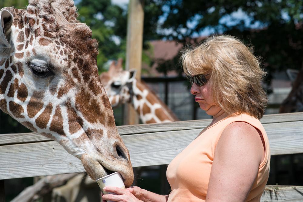 Cherie loves the giraffes.