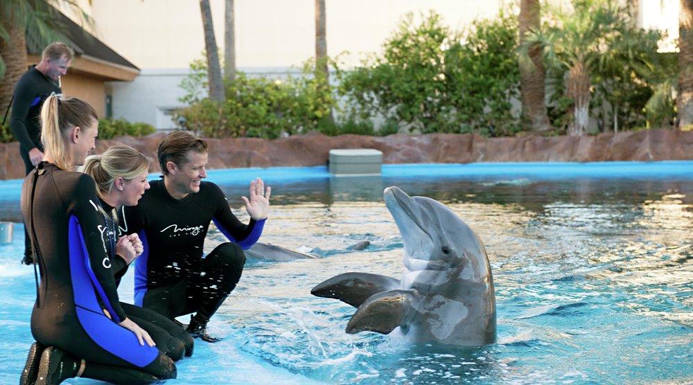 dolphin habitat.jpg