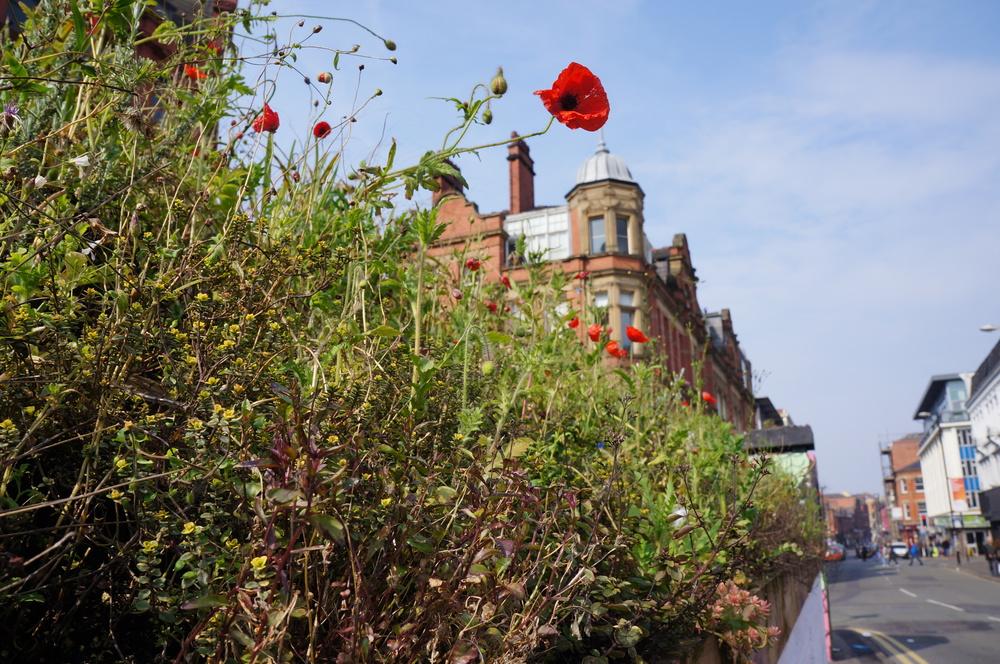 Stevenson Square roof garden.JPG