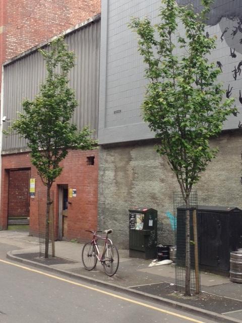 Tariff Street trees 2017b.JPG