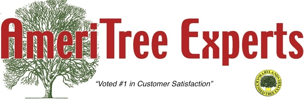 AmeriTree Experts