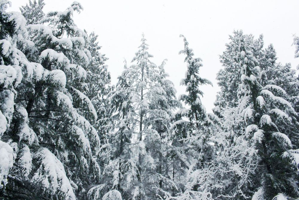 Snow day 2/6/2017