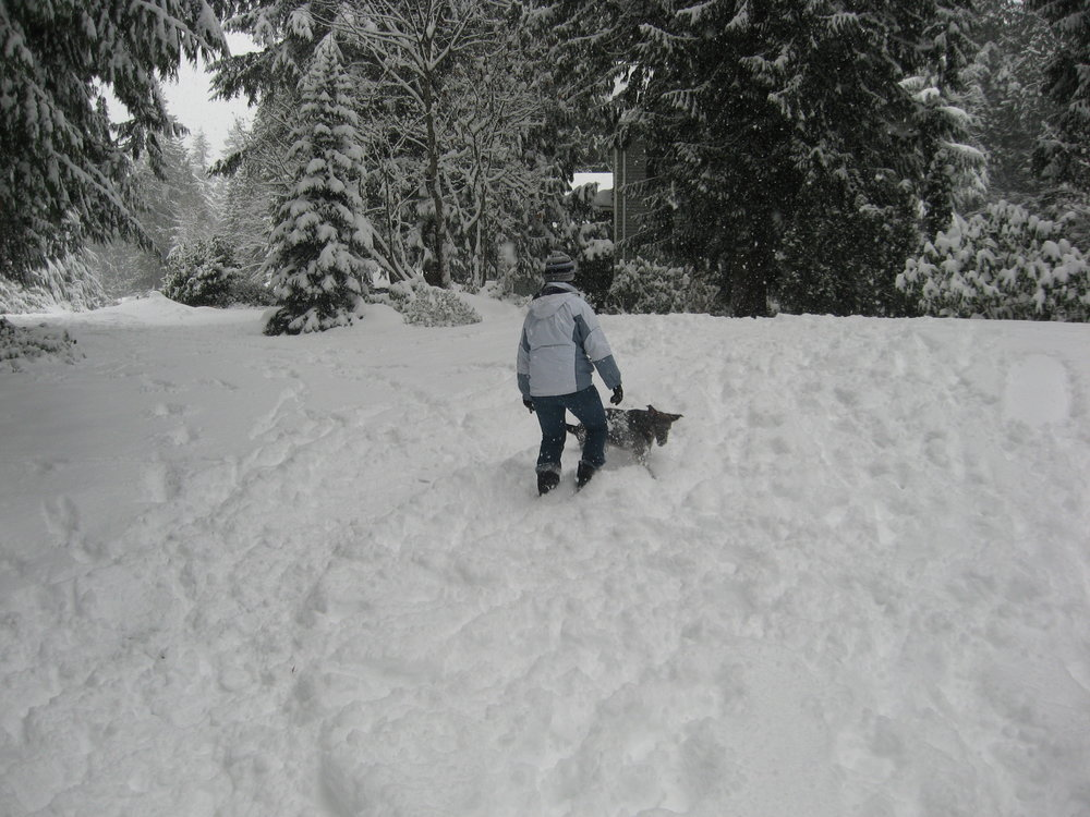 Thea & Toki in the snow in Woodinville, WA.