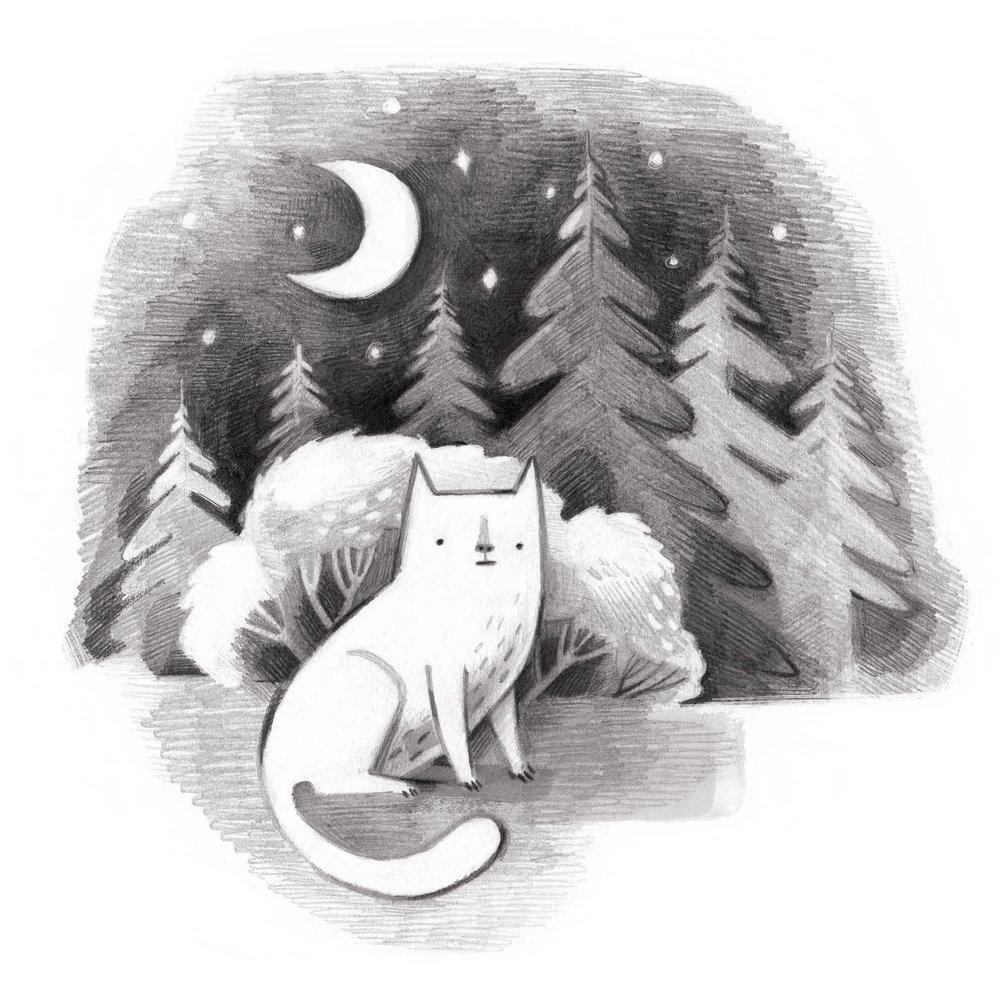Night Cat LR.jpg