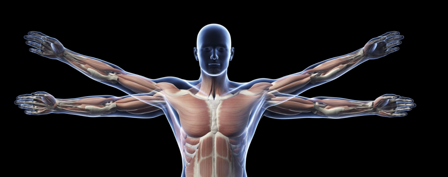Anatomy Physiology Open Learning Initiative