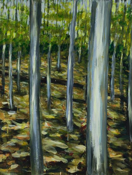 David's woods