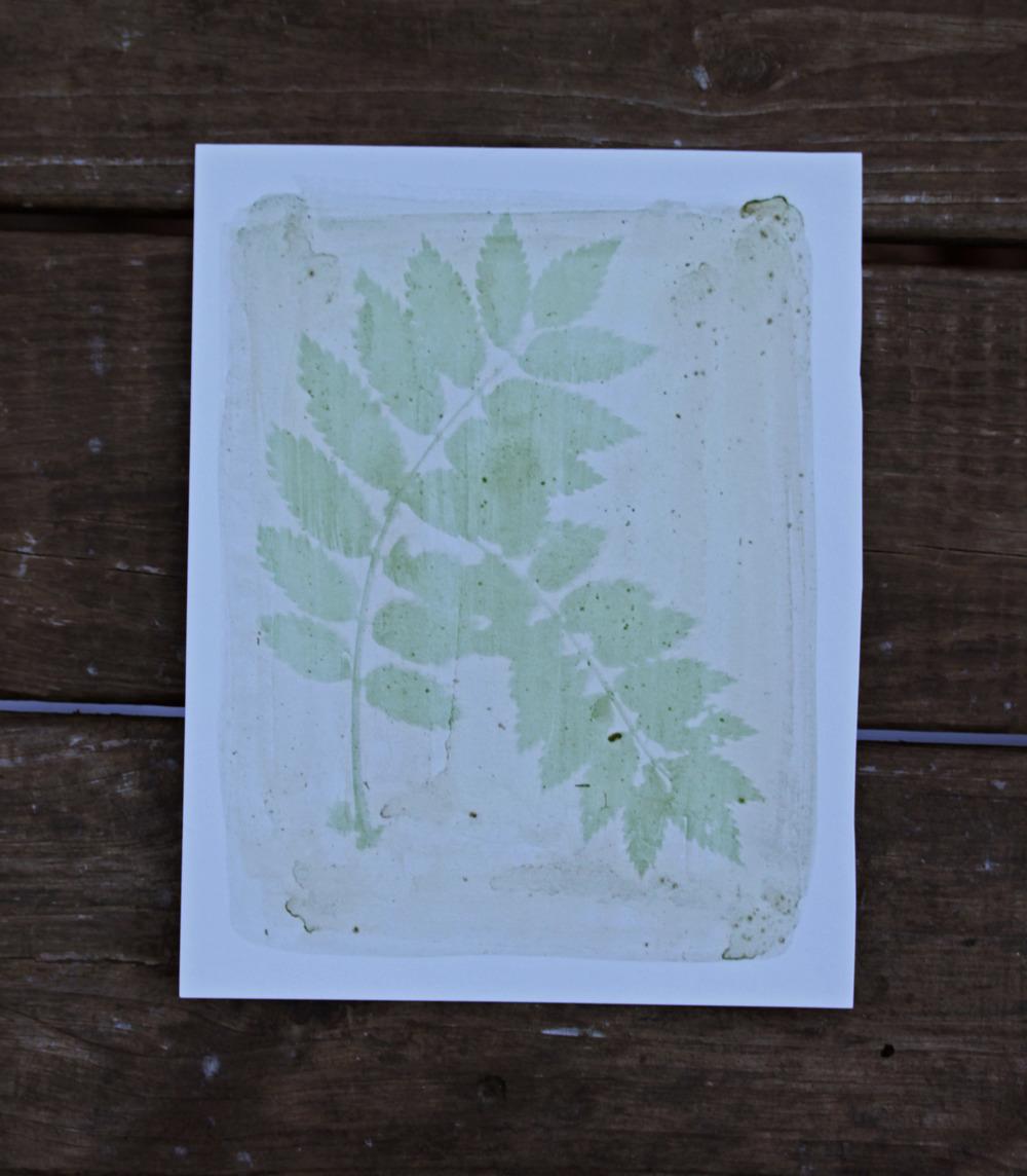 Evergreen Woodfern (Dryopteris Intermedia)