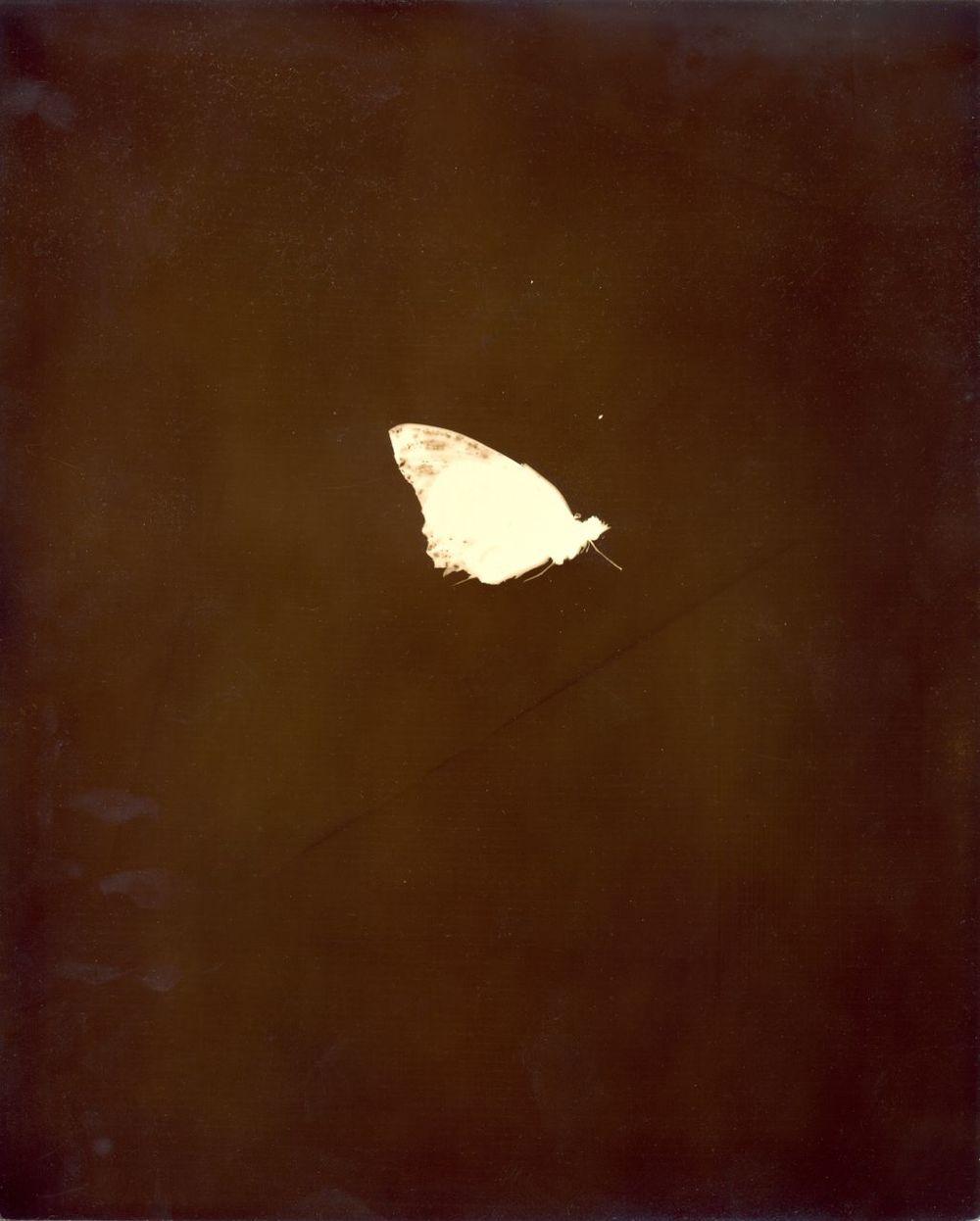 butterfly3 (1).jpg