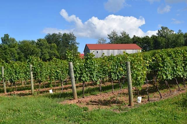 Jost Vineyards, Malagash, Nova Scotia. (Jane Adey)