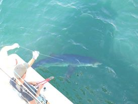 Shark fishing MA Charter.jpg