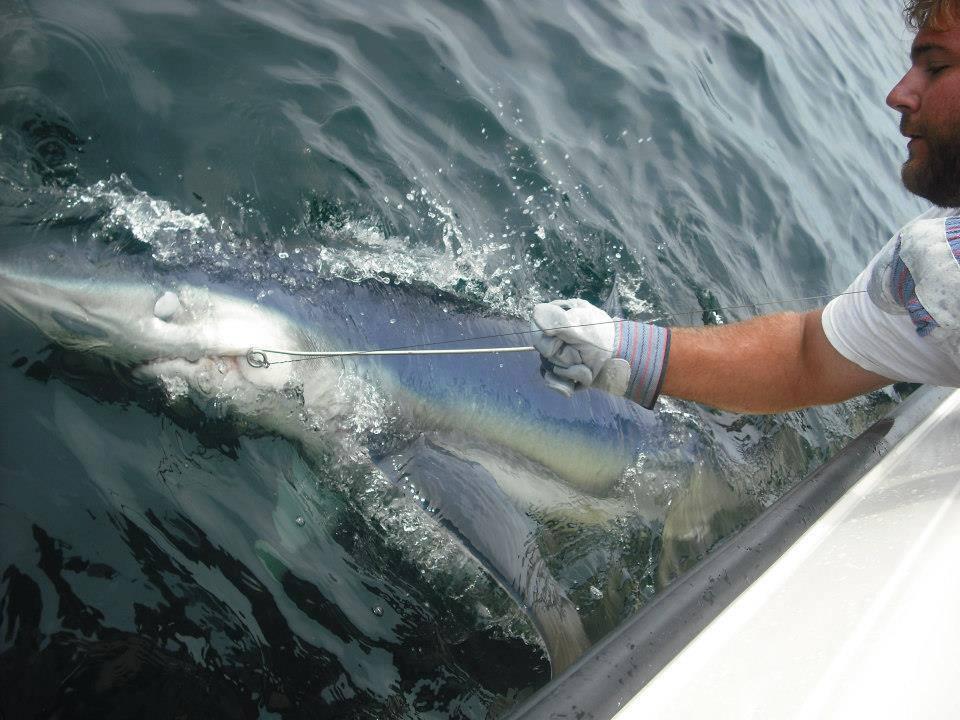 Sharking Newburyport Charter.jpg