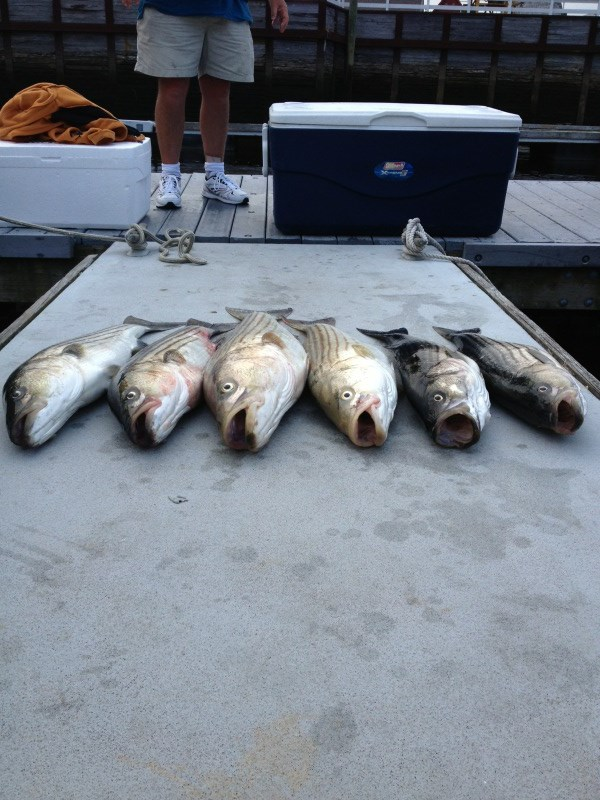 Striped bass fishing charter newburyport.jpg