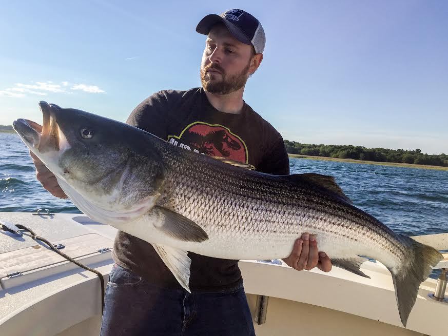 "Capt. Jay Shields of Stellwagen Media Fame here with a 48"" striper! Stellwagen Media is creating a video for Manolin Charters of footage from this past season. be on the look out!"